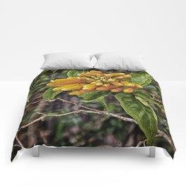 Beautiful buds of orange trumpet flower Comforters