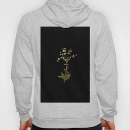Euphorbia Amygdoloides Mary Delany Delicate Paper Flower Collage Black Background Floral Botanical Hoody