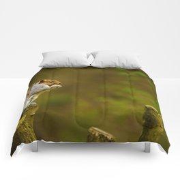 Cute Squirrel (Color) Comforters