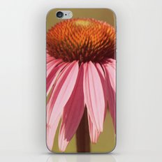 Basking in Summer's Glow iPhone & iPod Skin