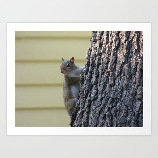squirrel II Art Print