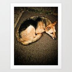 Dog disguised as a fox Art Print