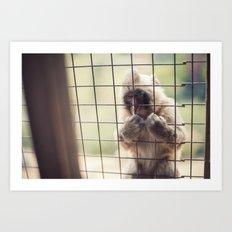 Arashiyama Monkey Art Print