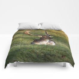 Mr Majestic Comforters