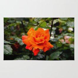 la beauté orange Rug