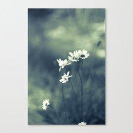 Split Tone Daisies Canvas Print