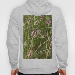 NIGELLA - Love-In-A-Mist Hoody