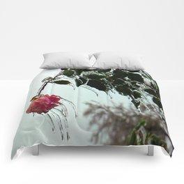 fROSEn Comforters
