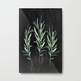 Eucalyptus Branches On Chalkboard Metal Print