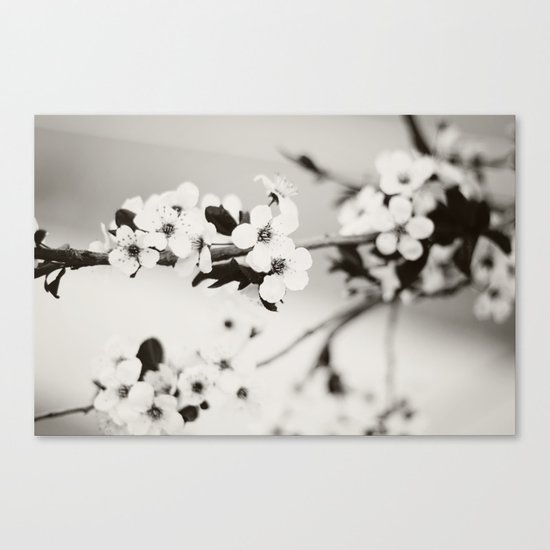 Cherry Blossoms (Black and White) Canvas Print