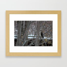 Hawk's Got an Eye on You Photo Framed Art Print