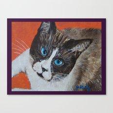 Rastus the Snowshoe cat Canvas Print