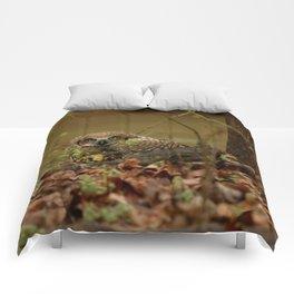 Spring Shower Comforters