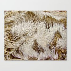 Boca Sloth coat  Canvas Print