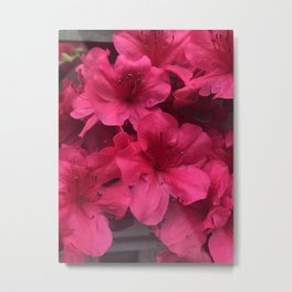 Steady Now - Rhododendron Metal Print