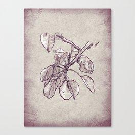 Pear tree Canvas Print