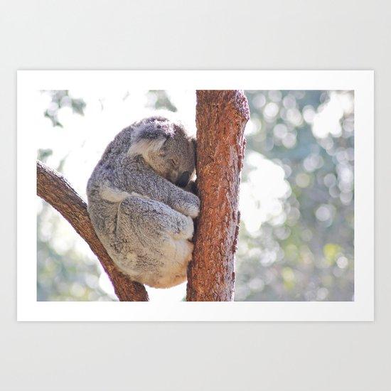 Sleeping in the Trees - Koala Bear Art Print