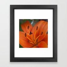 Orange Tiger Lily Framed Art Print