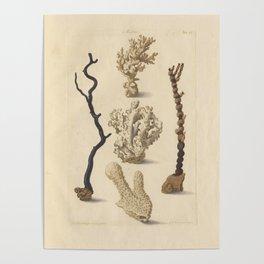 Naturalist Coral Poster