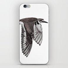 Vociferus peruvianus - Charadrius - Killdeer - Chorlo gritón iPhone & iPod Skin