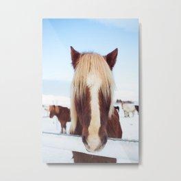 pony portrait  Metal Print