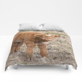 Scottish highlands baby cow Comforters