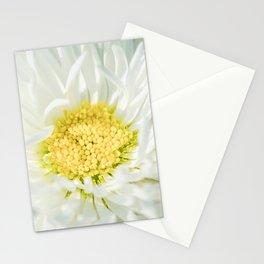 White Marguerite Daisy Flower Stationery Cards