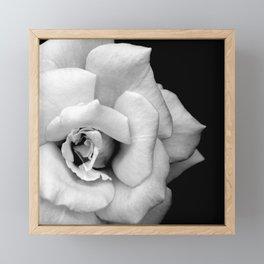Rose Monochrome Framed Mini Art Print