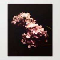 hydrangea Canvas Prints featuring Hydrangea by Christine Belanger