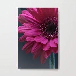 Bright Pink Gerbera Metal Print