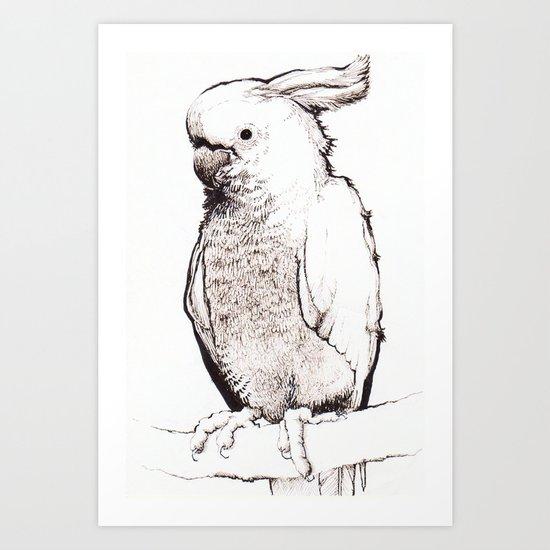 Lesser Sulphur-crested Cockatoo Art Print