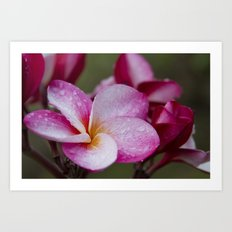 Pua Melia Floral Celebration Art Print