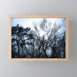 Walk in the Woods with the Sun through the Trees Framed Mini Art Print