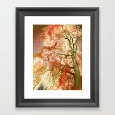 Majestic Tree Framed Art Print