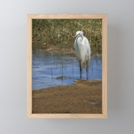 Snowy Egret of Chincoteague No. 3 Framed Mini Art Print