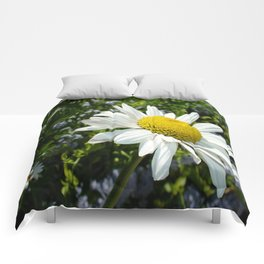 Close Up Common White Daisy With Garden Comforters