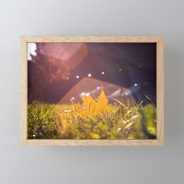 Sun Flare In The Fall Framed Mini Art Print