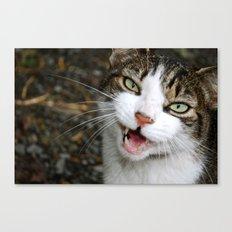 Meow! Canvas Print