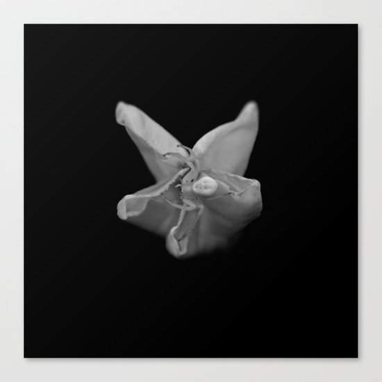 White Orb Spider Canvas Print