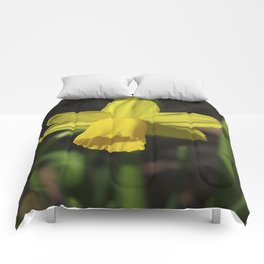 Golden Daffodil Comforters