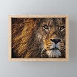Majestic Lion Framed Mini Art Print