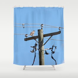 Red Tailed Hawk on Telephone Pole 3 Shower Curtain