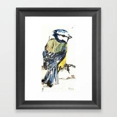 Mr Blue Tit Framed Art Print