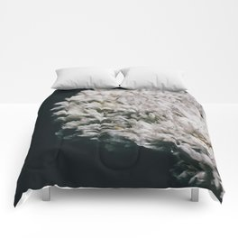 Celestine III Comforters