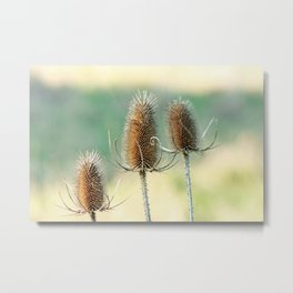 Look out - prickly plant ! Metal Print