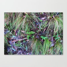 Rainforest No.9 Canvas Print