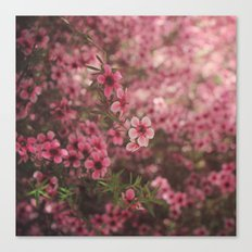 Pink Perfection Canvas Print