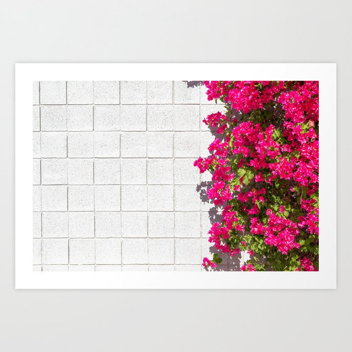 Bougainvilleas and White Brick Wall in Palm Springs, California Art Print