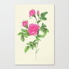 Ballpoint Pen, Redouté's Roses Canvas Print