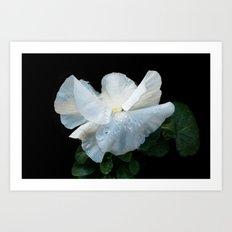 White as spring Art Print